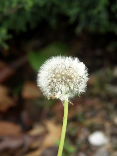 spring-5-weed