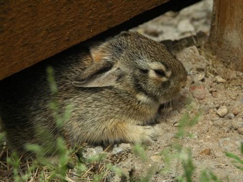 spring-bunnies2