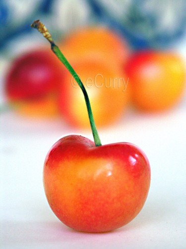 Rainier Cherries 1