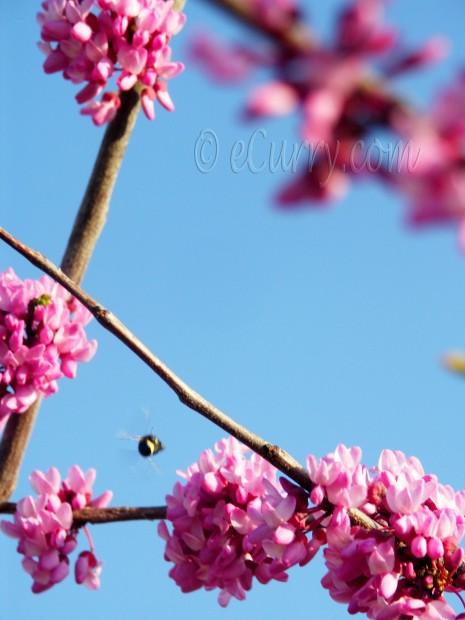 Spring Blossom/Flowers