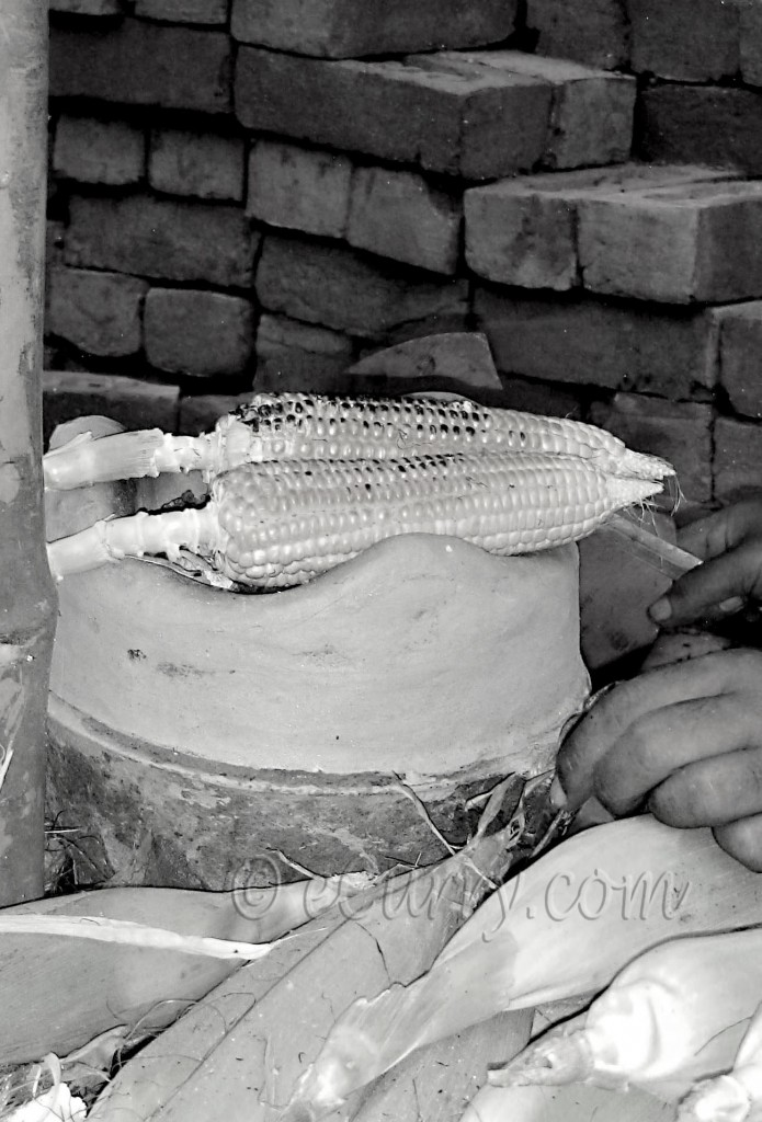 Roasting corn on portable clay oven