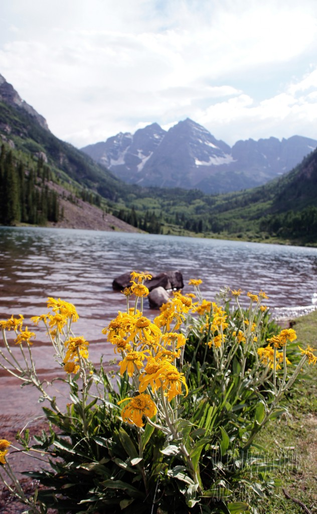 yellow flowers in Maroon Bells Aspen