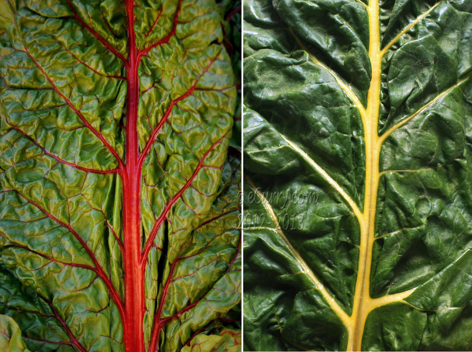 Chard Diptych 1