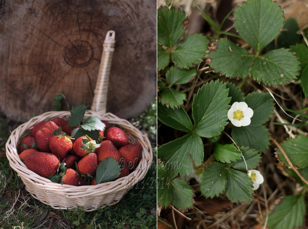Strawberries Diptych 1