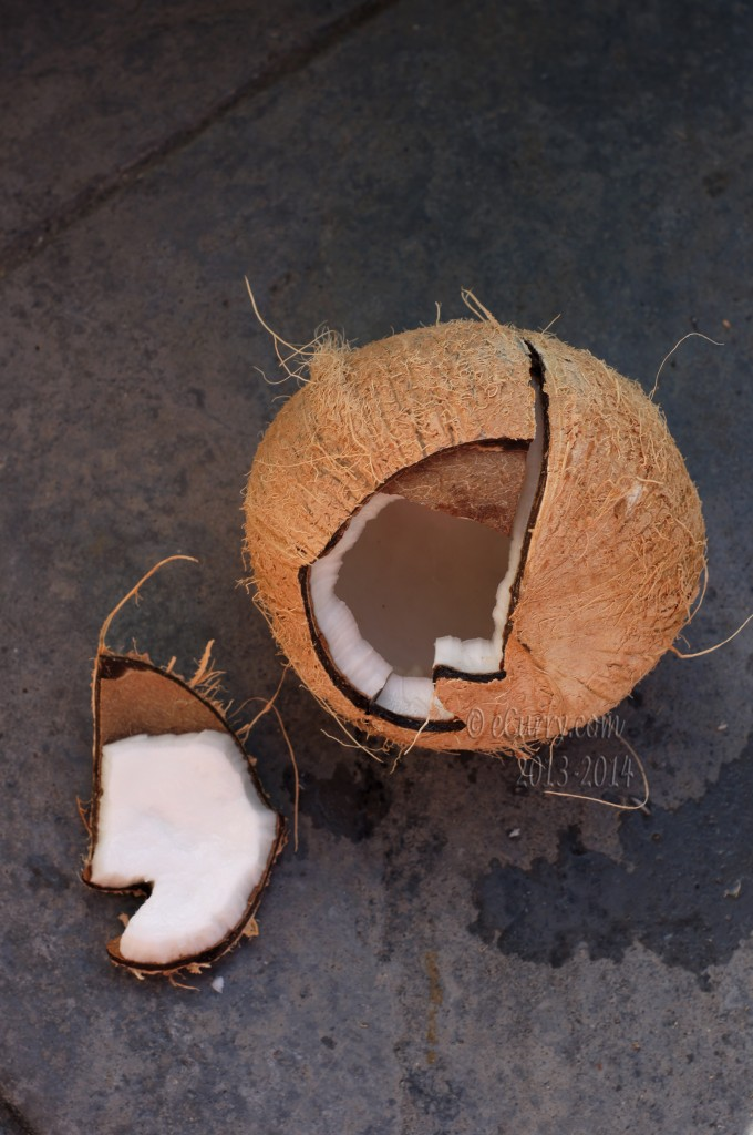 coconut-10.jpg