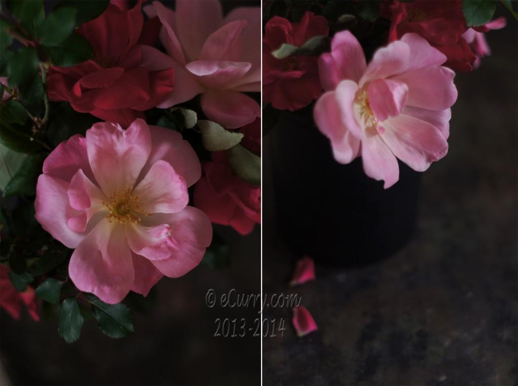 rose diptych 1