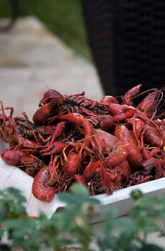 crawfish-boil-15.jpg