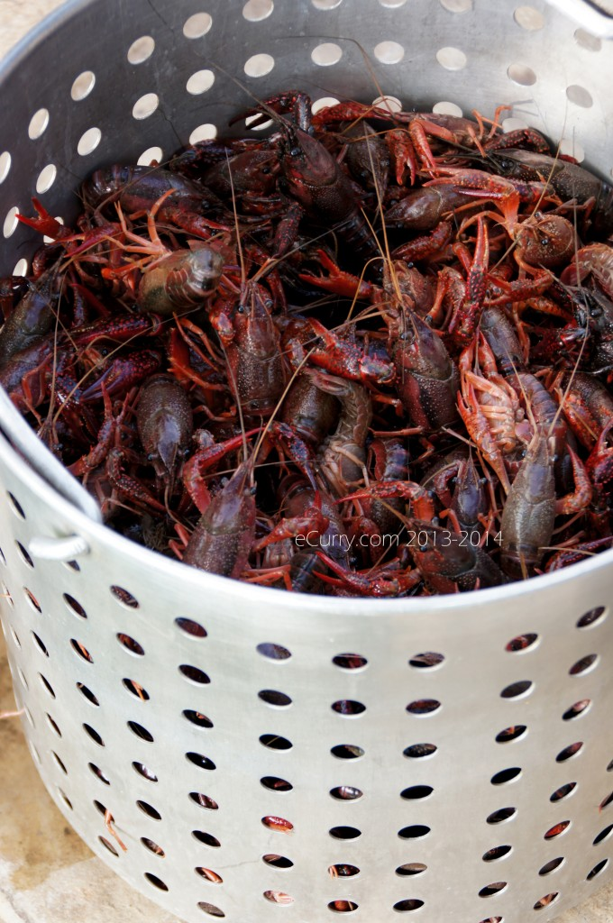 crawfish-boil-16.jpg