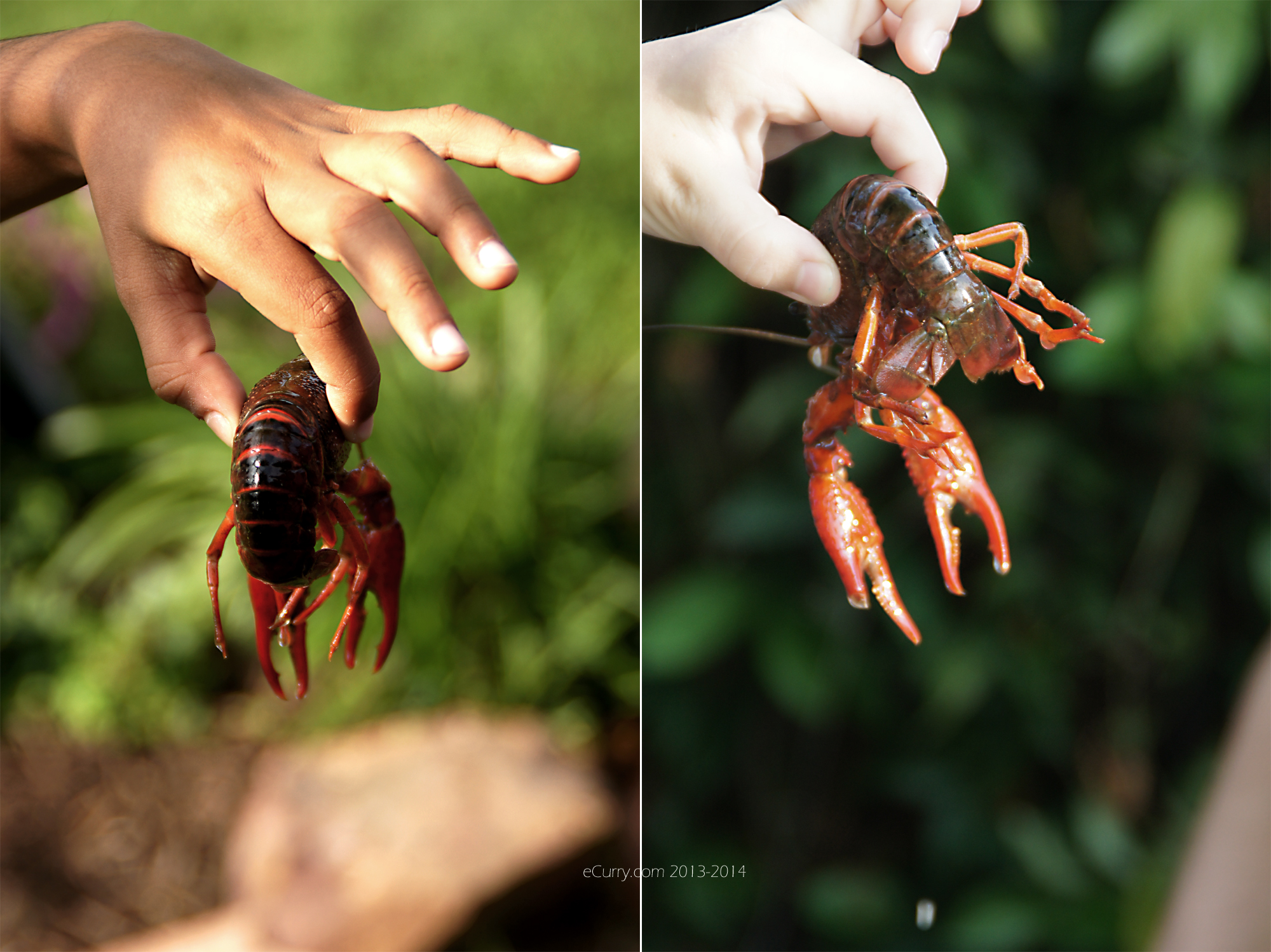 crawfish diptych 1