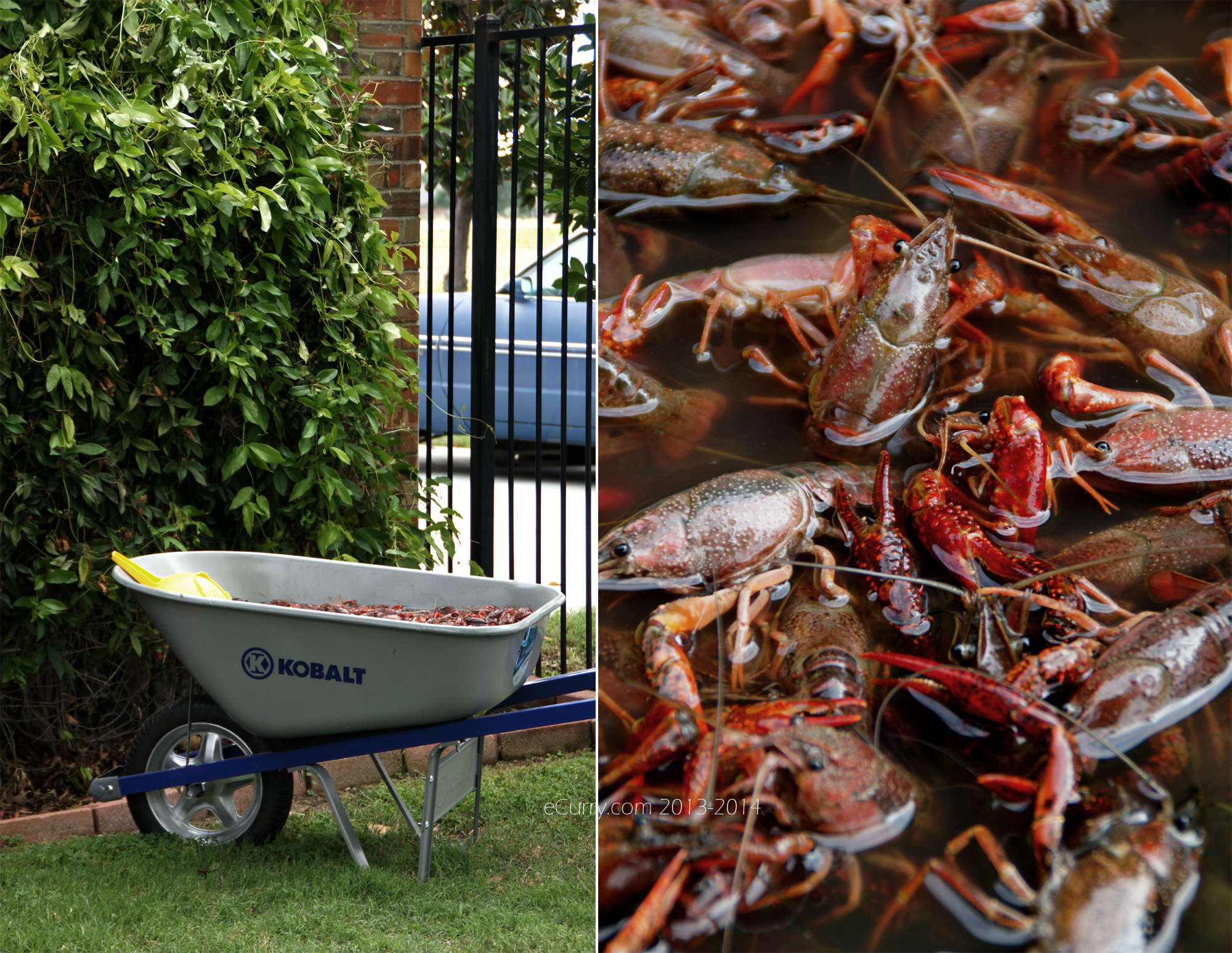 wheel barrow with crawfish diptych 1