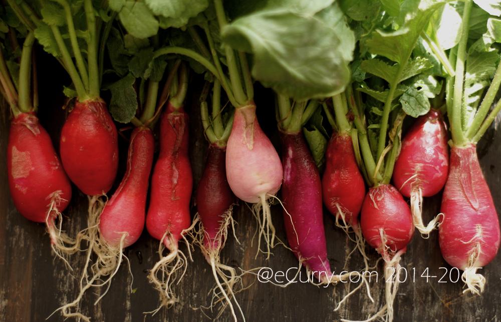 raw radish 6