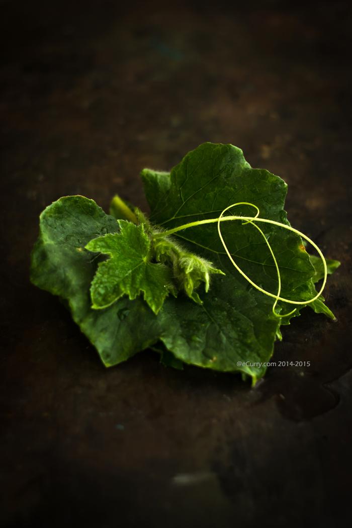 Pumpkin-Gourd Leaf 1