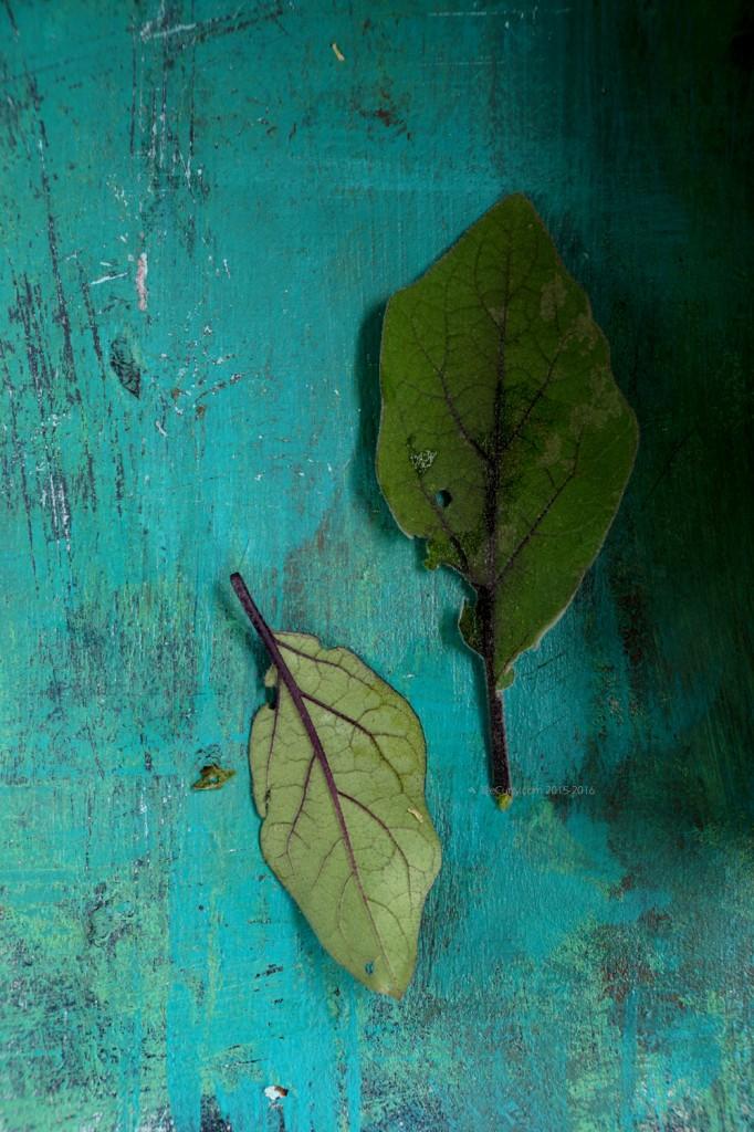 Eggplant leaf 5883_1